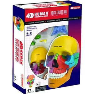 4D Didactic Exploded Human Skull Anatomy Model - Image two