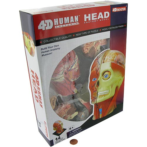 4D Human Head Anatomy Model - Image two