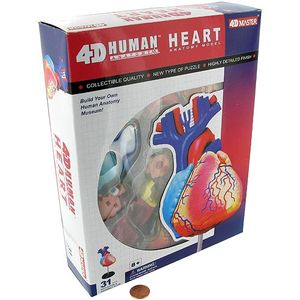 4D Human Heart Anatomy Model - Image One