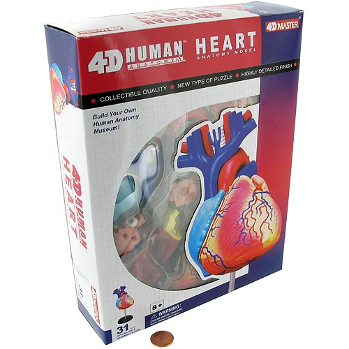 4D Human Heart Anatomy Model - Image two