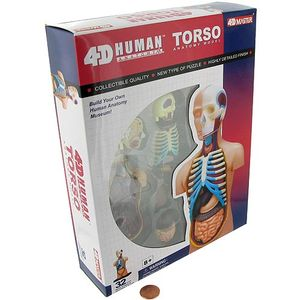 4D Human Torso Anatomy Model - Image two