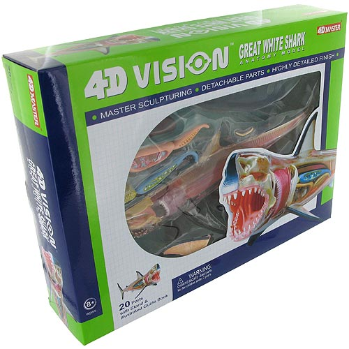 4D Great White Shark Anatomy Model - Image two