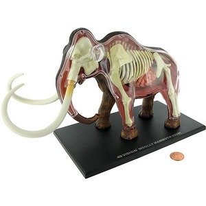 4D Woolly Mammoth Anatomy Model - Image One