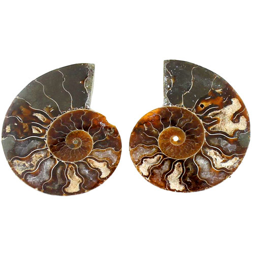 Ammonite Fossil Pair - 1.5 - 2 inch - Image one
