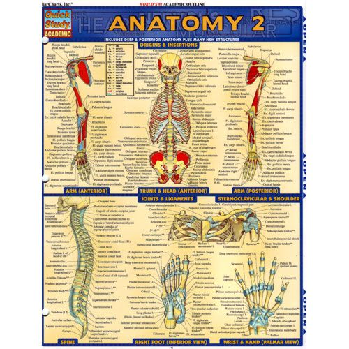 Anatomy Study Guides - Home | Facebook