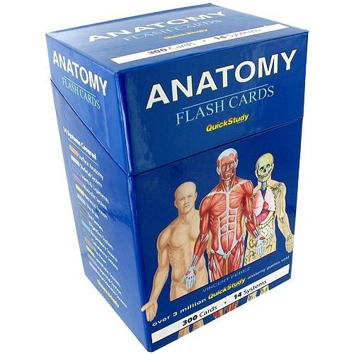 Online anatomy flash cards