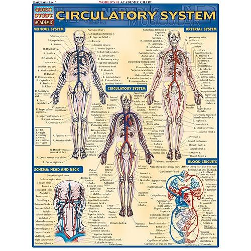 circulatory system pictures. Circulatory System Study Chart