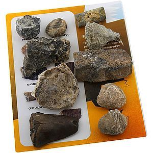 Explore Geology - 10 Fossils Set (Image One) @ xUmp.com