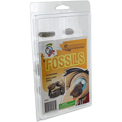 Explore Geology - 10 Fossils Set - Image one