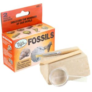 Fossils Excavation Mini Kit - Image One