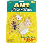 Ant Life Cycle Stages.