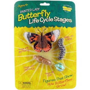 Butterfly Life Cycle Stages - Image One