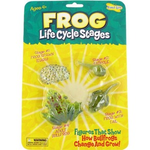 Frog Life Cycle Stages - Image One