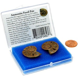 Matched Halves Ammonite Fossil Set - Image One