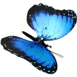 Moving Butterfly - Blue Morpho.