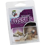Oceanic Fossils Set.