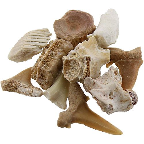 Oceanic Fossils Set - Image two