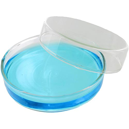 petri dish Bacteria cultures should be examined in closed containers, like petri dishes find out about how to observe bacteria like a scientist.