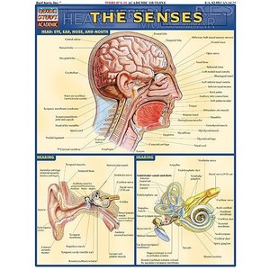 The Senses Study Chart - Image One