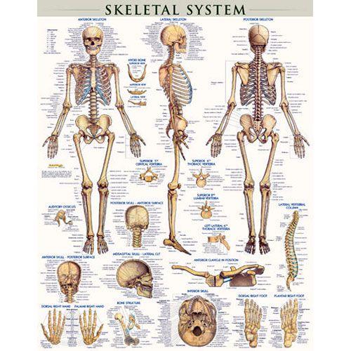 glow human skeleton 4m kit by xump, Skeleton