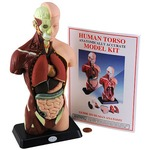 Human Anatomy Model - Small 10 in