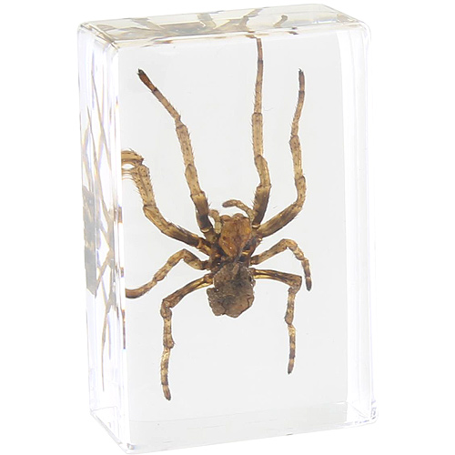 Spider - Small Specimen - Image one