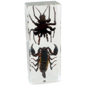 Tarantula and Black Scorpion - Real Specimens - Image One