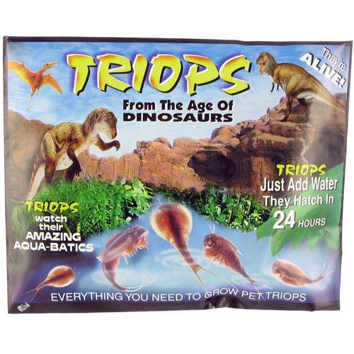 Triops Eggs - Image one