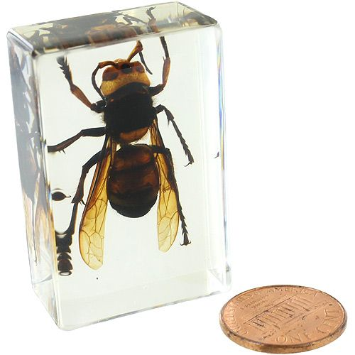 Wasp - Small Specimen - Image one
