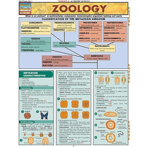 Zoology Study Chart