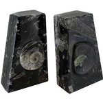 Ammonite Fossil Bookends.