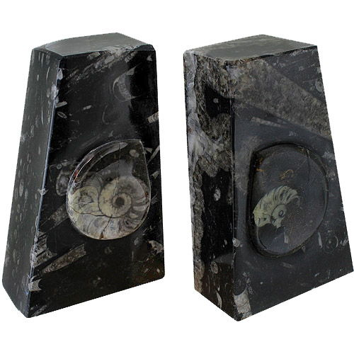 Ammonite Fossil Bookends - Image one
