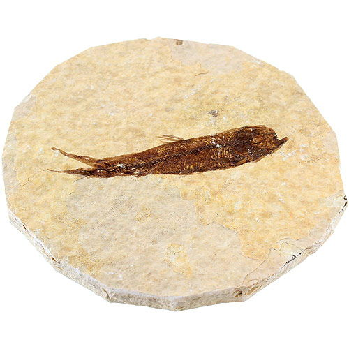 Fossil Fish - Image one