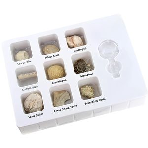 GeoCentral Fossils Science Kit - Image two