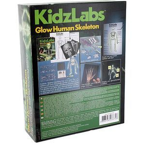 Glow Human Skeleton 4M Kit - Image One
