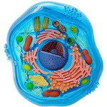 Photo of the: 4D Animal Cell Model