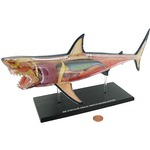 Photo of the: 4D Great White Shark Anatomy Model