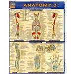 Photo of the: Anatomy 2 Study Chart