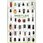 Photo of the: Beetles Poster