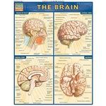 Photo of the: The Brain Study Chart