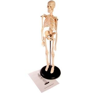 Photo of the: Desktop Skeleton