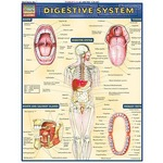 Photo of the: Digestive System Study Chart