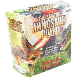 Photo of the: The Amazing Dinosaur Plant