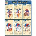 Photo of the: The Heart Study Chart