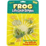 Photo of the: Frog Life Cycle Stages