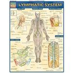 Photo of the: Lymphatic System Study Chart