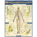 Photo of the: Nervous System Study Chart