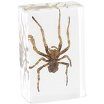 Photo of the: Spider - Small Specimen