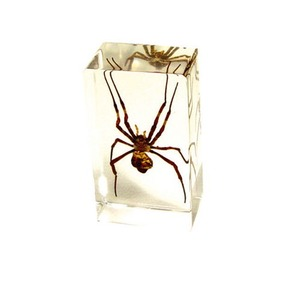 Photo of the: Spider Specimen