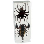 Photo of the: Tarantula and Black Scorpion - Real Specimens